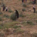 İsrail, Filistinlilerin zeytin ağaçlarını kesti
