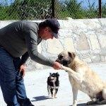 Hayvan barınağında sokak hayvanlarına itaat eğitimi