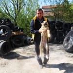 Lastiklerin arasından çıkamayan yavru köpekler kurtarıldı