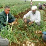 15 bin tarım işçisine iş imkanı sağladılar!