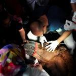 Gözleri görmeyen güreşçi deveye katarakt ameliyatı