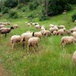 300 Koyun Projesi'nde usulsüzlük iddialarına yanıt