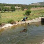 Domuz avcısı, yavru domuzlarını boğulmaktan kurtardı