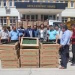 Düziçi'nde 75 bin domates fidesi dağıtıldı