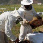 Organik arıcılara müjde! destek geliyor