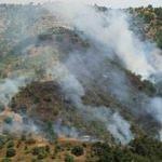 Tarım arazisindeki yangın ormanı da yaktı