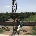 Mersin'de direğe bağlı bulunan 2 köpek koruma altına alındı