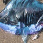 Türkiye'yi suçladılar! Ülkede köpek balığı paniği