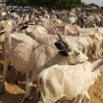 Nijerya'da inek hırsızları köye saldırdı: 23 ölü