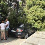 Ağaç park halindeki araçların üzerine devrildi