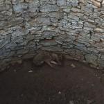 Kuyuya düşen tilki kurtarıldı