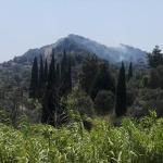 Söke'de zeytinlik alanda yangın