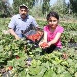 Köyünden göçü engellemek için çilek üretimine başladı