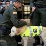 Bu köpeği öldürene 70 bin dolar verilecek!