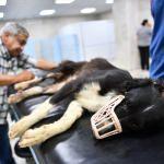 Gaziantep'te silahla vurulan köpek tedavi altına alındı