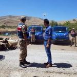 Elazığ'da kayıp koyunlar uçangözle bulundu