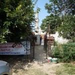 Edirne'nin sokak hayvanları öksüz kaldı