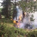 Bolu'da ormanlık alana yıldırım düştü