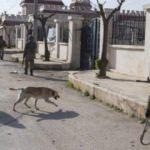 Afrin'de bulvarlara anlamlı isimler