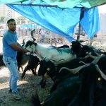 Uşak hayvan pazarında yoğunluk