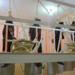 Irak'ta 14 kişiye idam kararı!