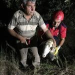 Denizli'de kurbanlık koyun su kuyusuna düştü