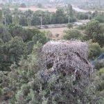 Beyşehir'in leylekleri göç etti
