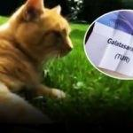 Bayern'in kedisinden Galatasaray'a ölüm grubu