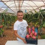 Kumluca'da ejder meyvesi yetiştirilmeye başlandı