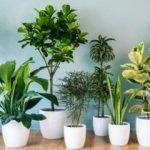 Bakımı kolay olan 8 bitki
