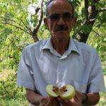 Üretici şokta, elmanın yüzde 80'i zarar gördü!