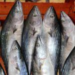 Olumsuz hava balık fiyatlarını artırdı