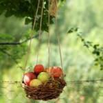 'Göz hakkı' sepetiyle meyve ikramı