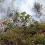 Milas'ta 5 dönüm ormanlık yandı