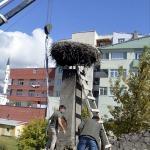 Bina yıkılmadan önce çatısındaki leylek yuvası taşındı