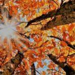 Sonbahar Ekinoksu nedir? 23 Eylül Ekinoksu hakkında şaşırtan gerçek...