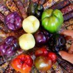 Tarımda yeni soluk! Renkli sebze ve meyveler...