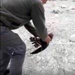 Elazığ'da tedavisi tamamlanan leylek ve atmaca doğaya bırakıldı