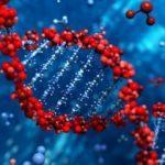 Türk bilim insanı kanser tedavisinde umut oldu