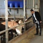 Girişimci kardeşler devlet desteğiyle çiftlik kurdu