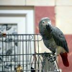 Miyavlayan papağan ilgi görüyor