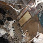 Tavukları telef eden köpek kümeste yakalandı