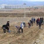 Beyşehir OSB'de fidan dikme etkinliği