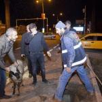 Su tahliye kuyusuna düşen koyunu itfaiye ekibi kurtardı