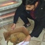 Menfeze sıkışan köpek yavrusunu öğretmenler kurtardı