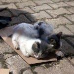 """Taziye çadırı yağmurdan ıslanan sahipsiz kedilere """"yuva"""" oldu"""