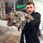 Donmak üzereyken bulunan baykuşa şefkat eli