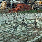 Isparta'da ağaçlara zarar veren kişiye suç duyurusu