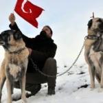 Avrupa ülkesinin tek umudu Türk kangalı!