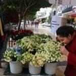 Bu çiçekleri koklamak parayla!